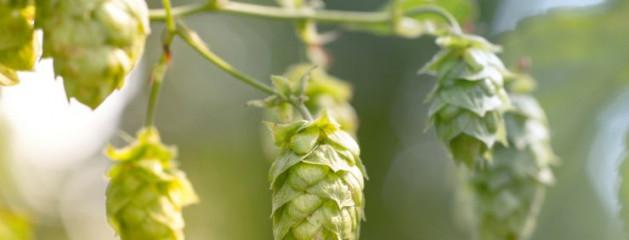 Продажи пива в Британии упали до 20-летнего минимума